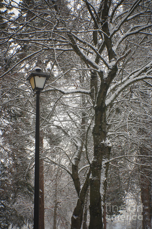 Lamp Photograph - Winter Lamp Post by Idaho Scenic Images Linda Lantzy