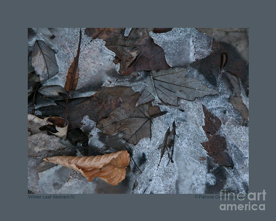 Winter Leaf Abstract-IV by Patricia Overmoyer