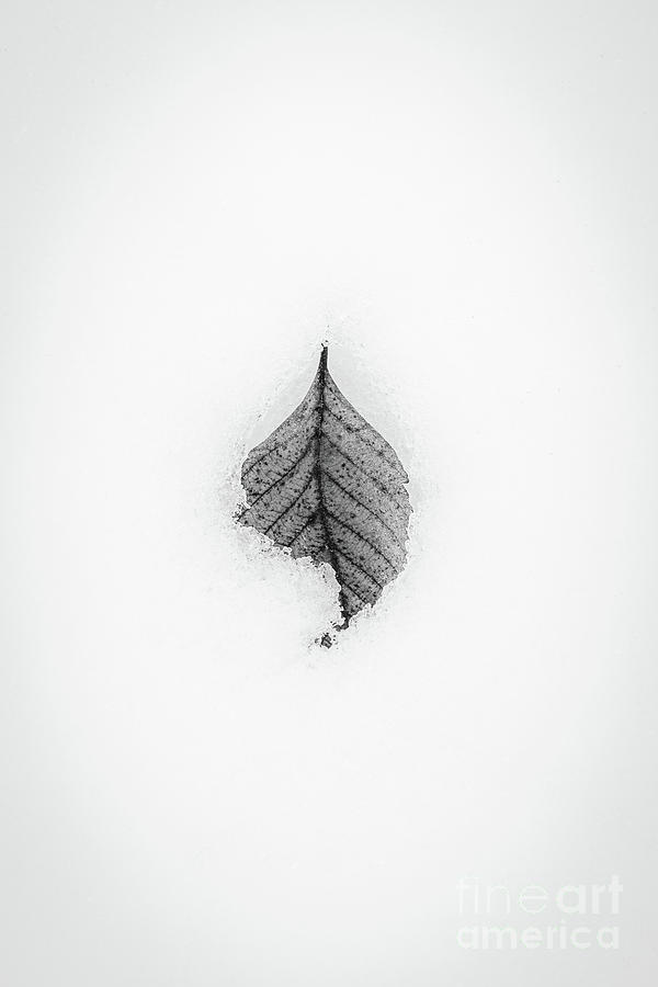 Winter Leaf by David Hillier