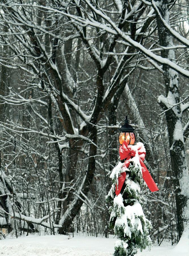 Winter Light Photograph by Darlene Grover