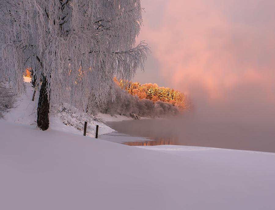 Winter Photograph - Winter Light by Rose-Maries Pictures