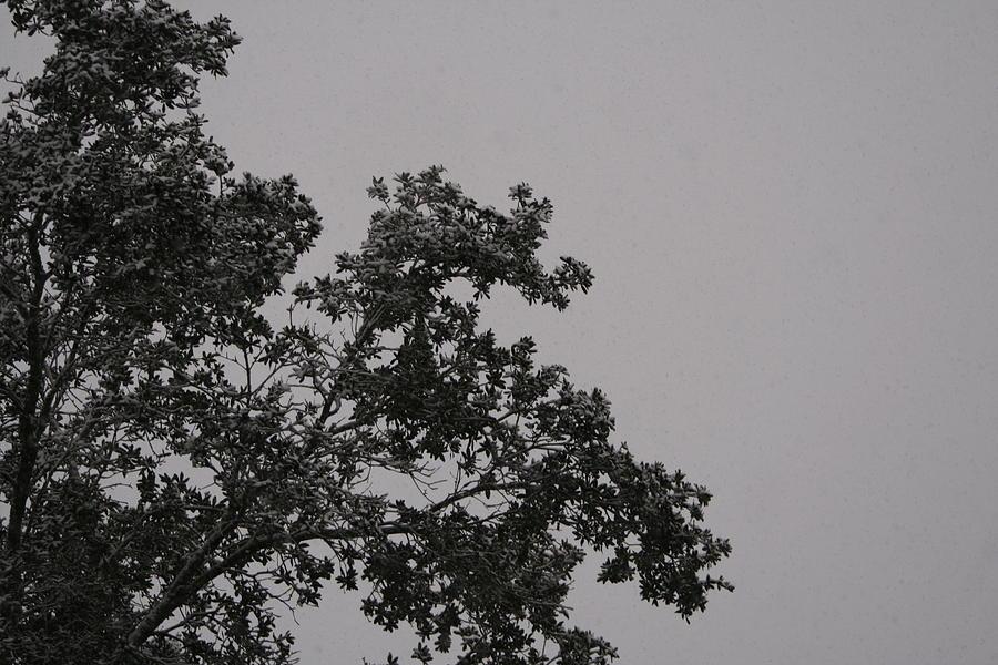 Winter Photograph - Winter by Lisa Johnston