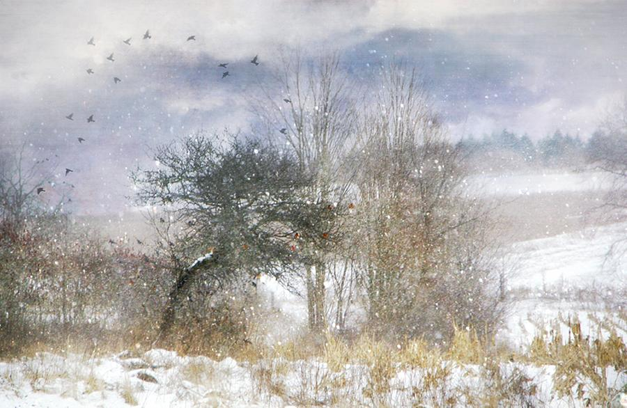 Winter Photograph - Winter Magic by Stephanie Calhoun