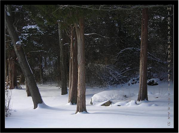 Winter Photograph by Megen McAuliffe