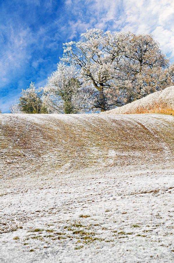 Winter Photograph - Winter by Meirion Matthias