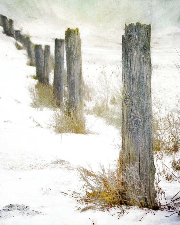 Winter Moment Photograph