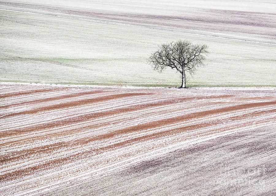 Winter Mosaic by Janet Burdon