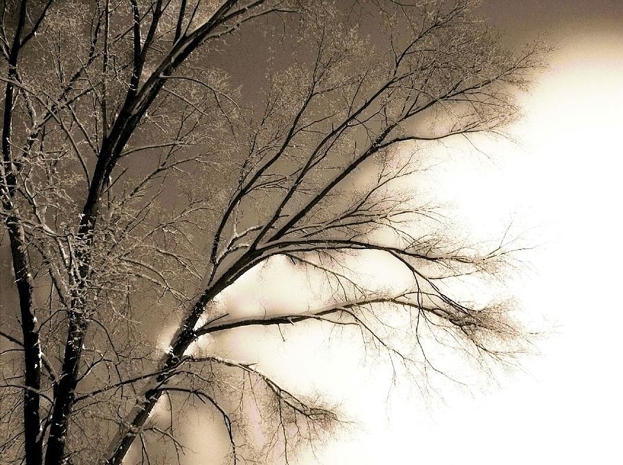 Winter Photograph - Winter Mulberry  by Larry Ney  II