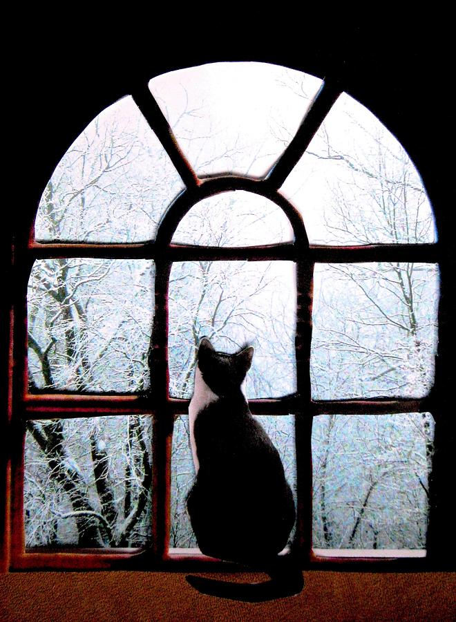 Cats In Windows Photograph - Winter Musing by Angela Davies