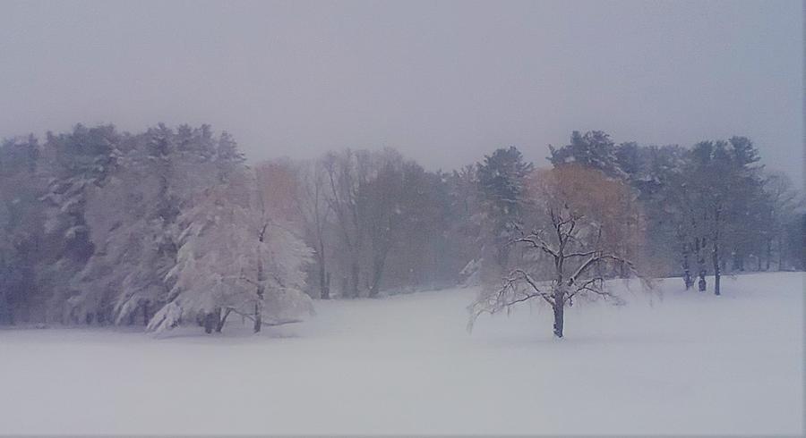 Winter by Nina-Rosa Duddy