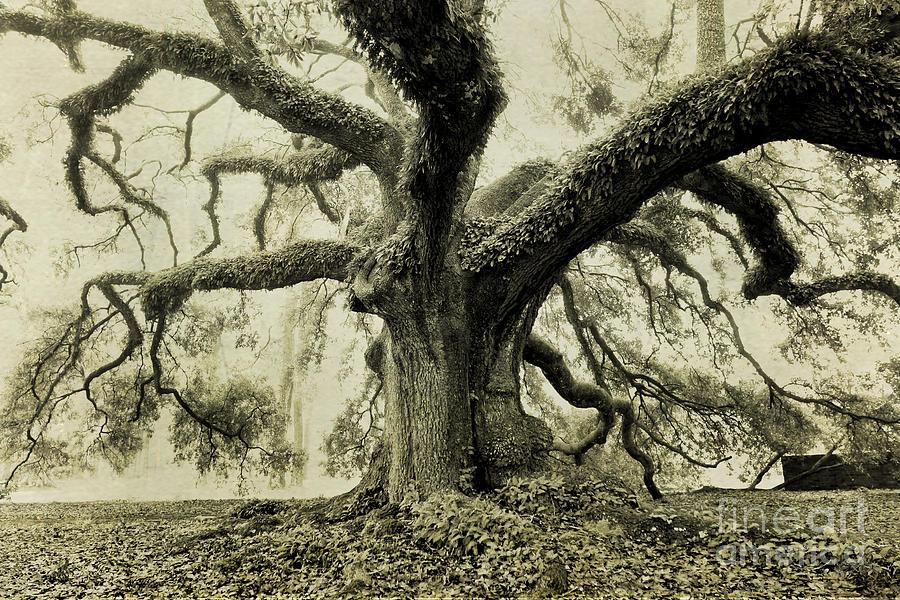 Oak Tree Photograph - Winter Oak by Scott Pellegrin