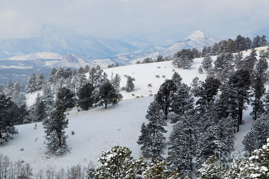 Winter On Bald Mountain Colorado Photograph