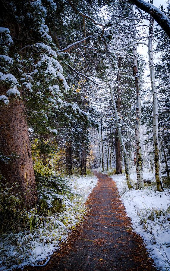 Winter Path Photograph
