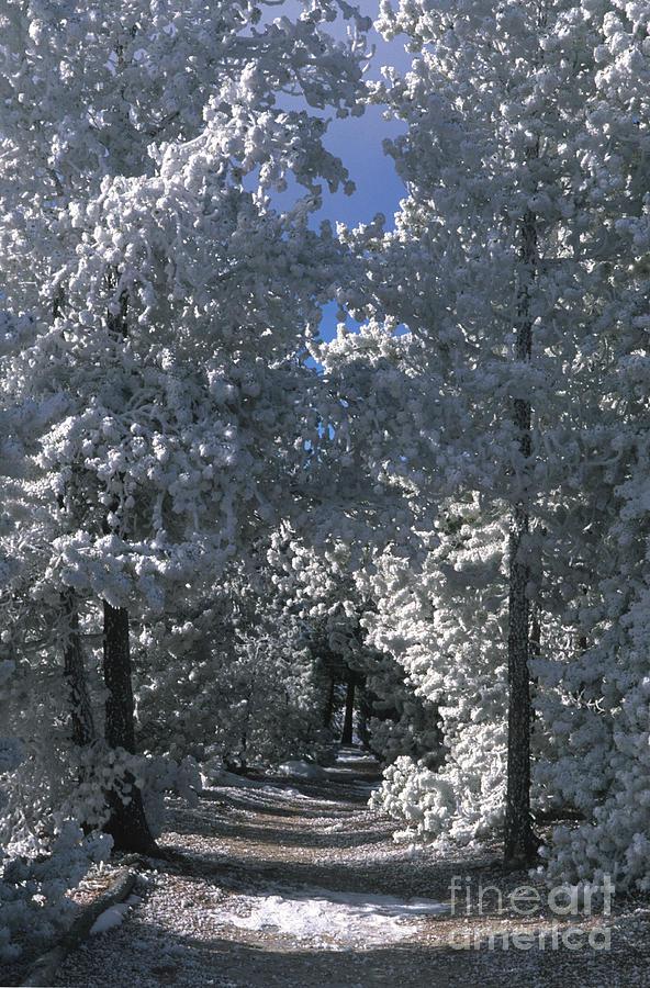 Yellowstone National Park Photograph - Winter Pathway by Sandra Bronstein