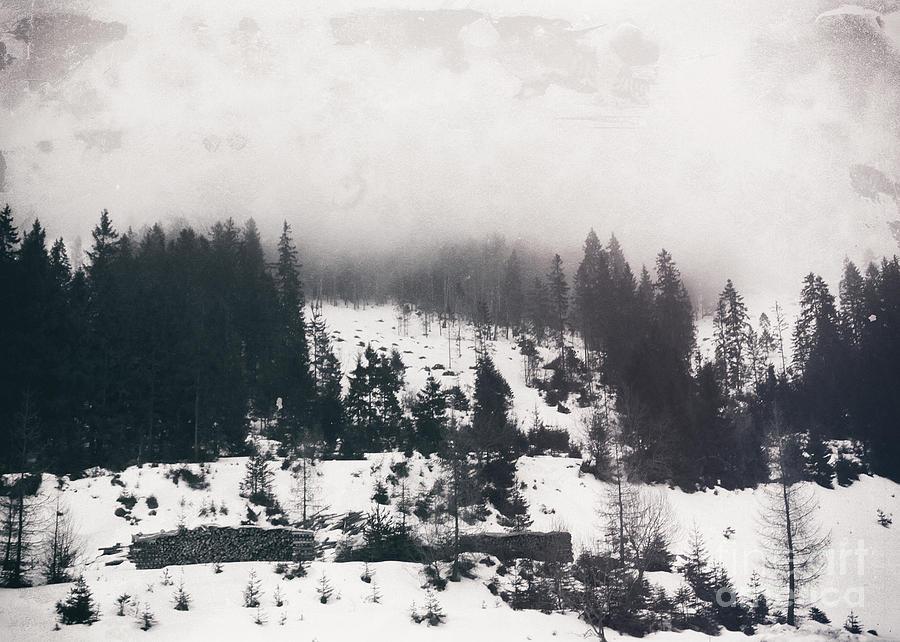 Winter Photo Photograph