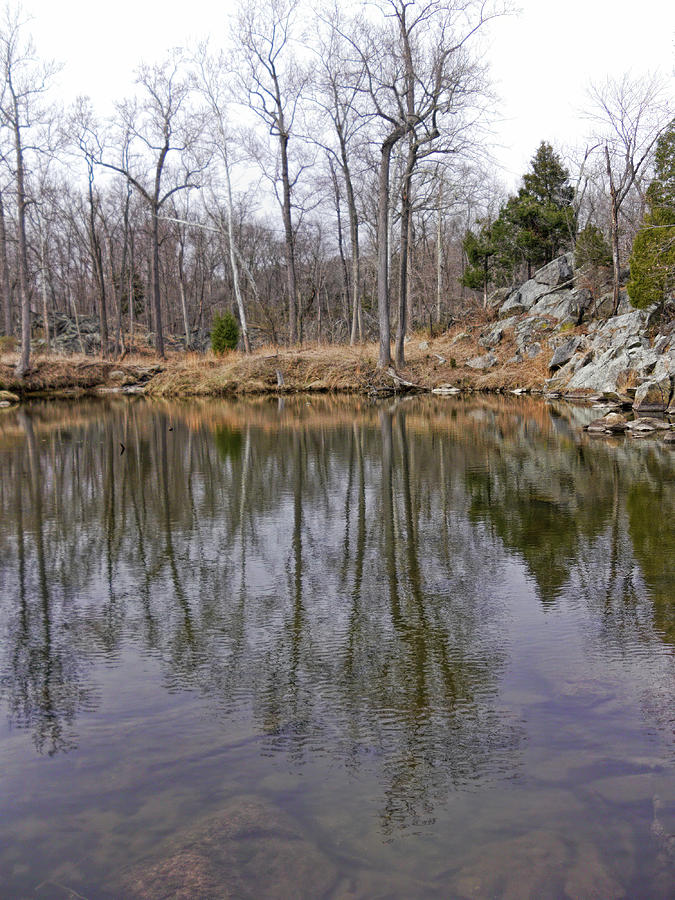 Winter Pond Reflection Photograph