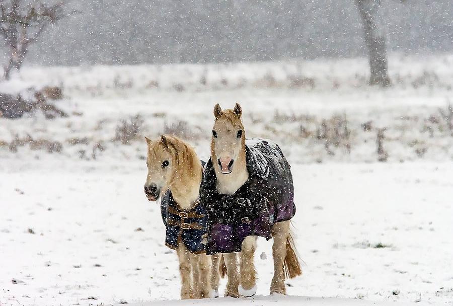 Winter pony by Cliff Norton
