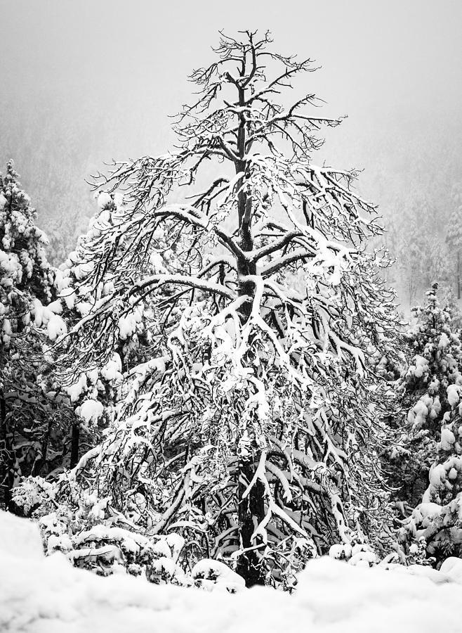 Winter by Racheal Christian