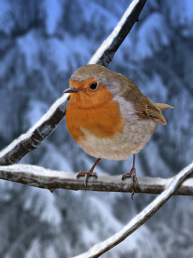 Winter Robin by Nigel Follett