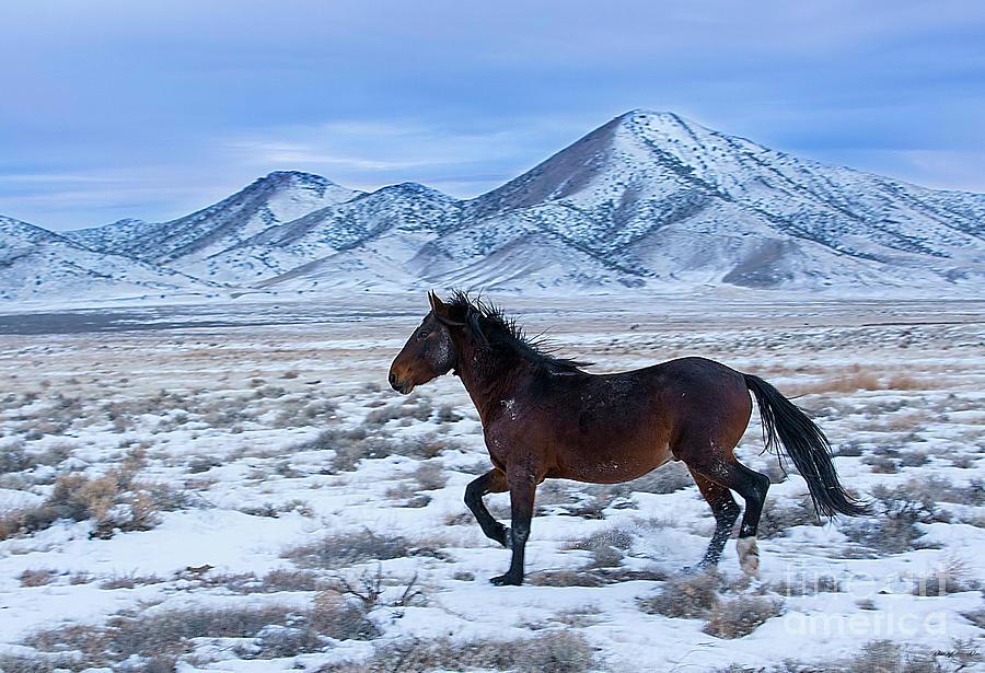 Nikon Photograph - Winter Run by Nicole Markmann Nelson