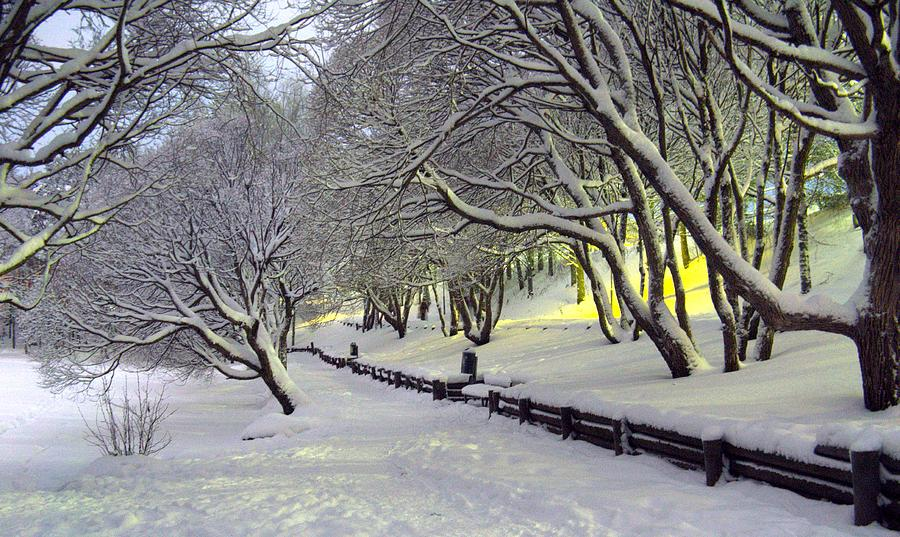 Winter Photograph - Winter Scene 1 by Sami Tiainen