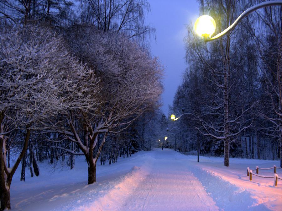 Winter Photograph - Winter Scene 4 by Sami Tiainen