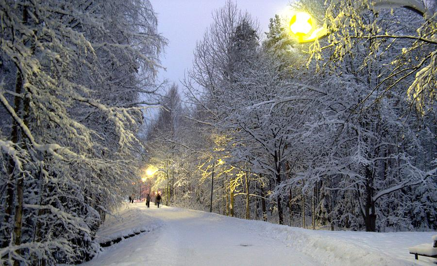 Winter Photograph - Winter Scene 5 by Sami Tiainen
