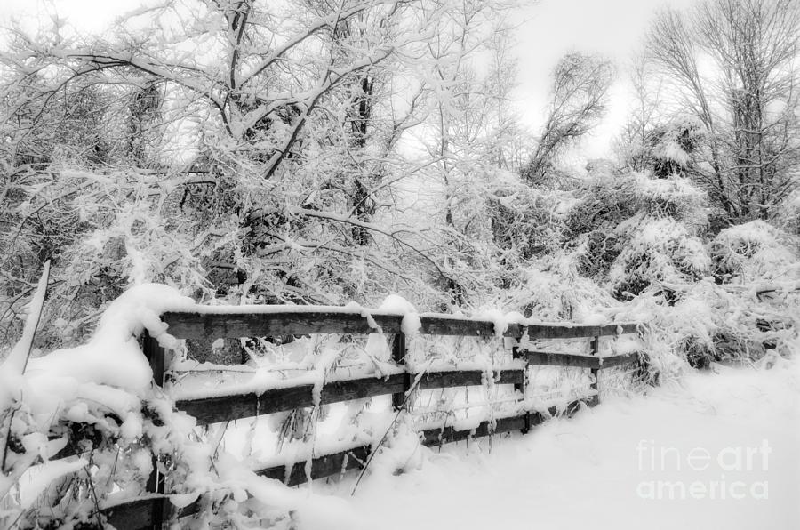 Winter Photograph - Winter Scene by Kathy Jennings