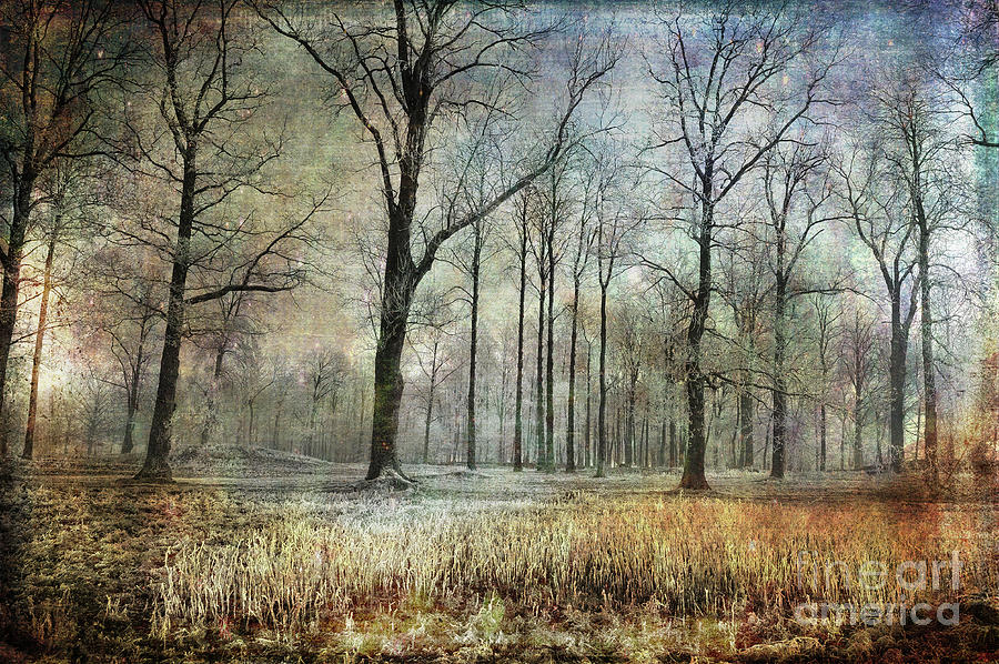 Horten Photograph - Winter Serenity by Randi Grace Nilsberg