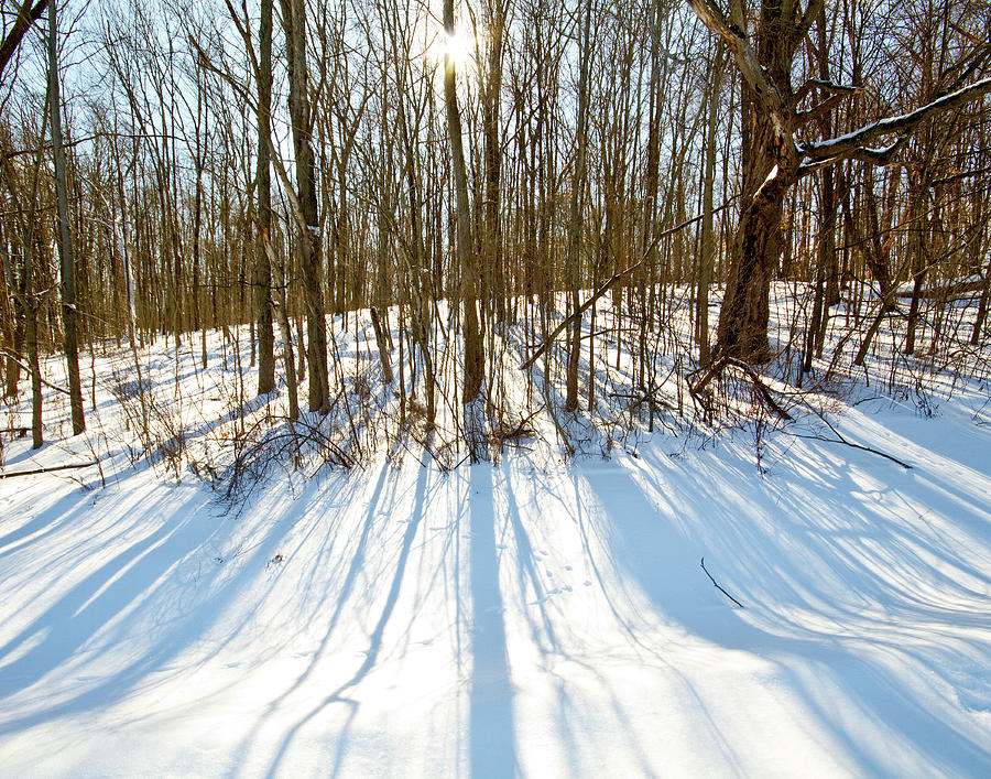 Bath Nature Preserve Photograph - Winter Shadows by Tim Fitzwater