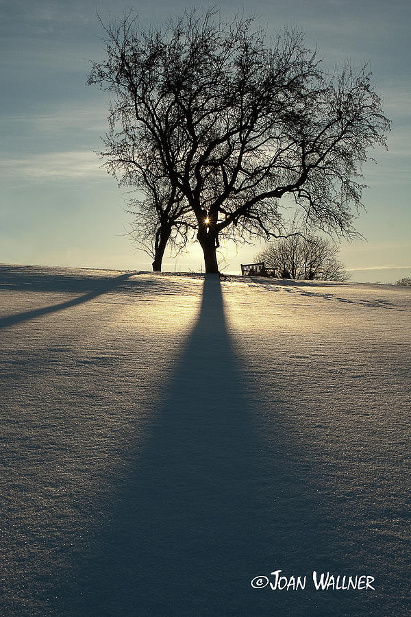 Winter Photograph - Winter Silhouette by Joan Wallner