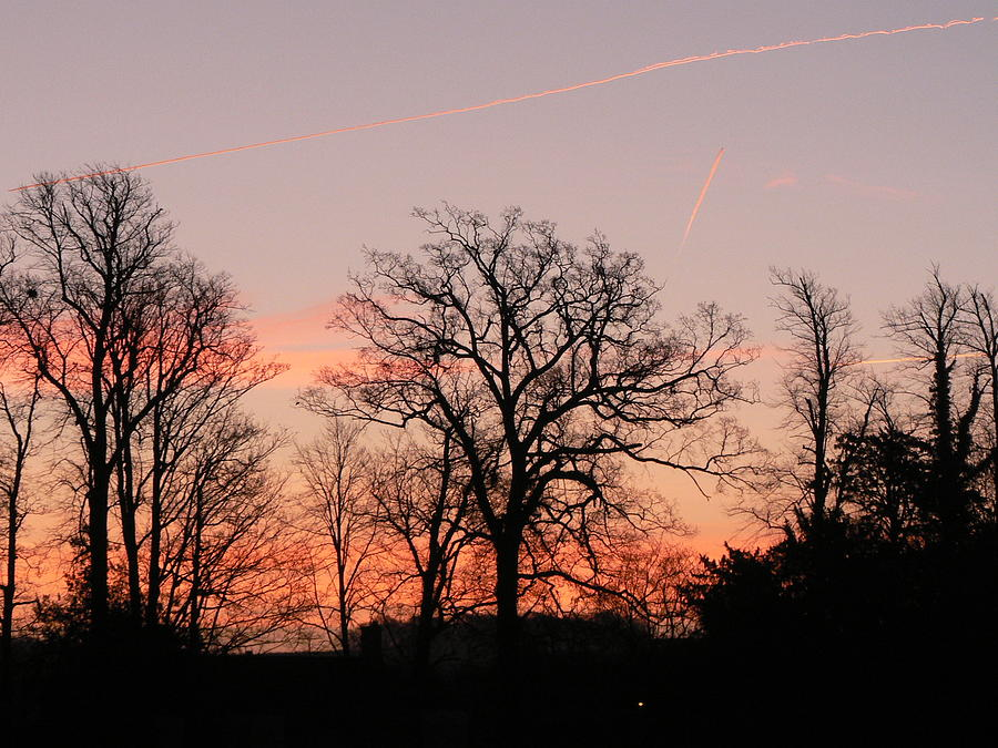 Trees Photograph - Winter Skies by Lynne Iddon