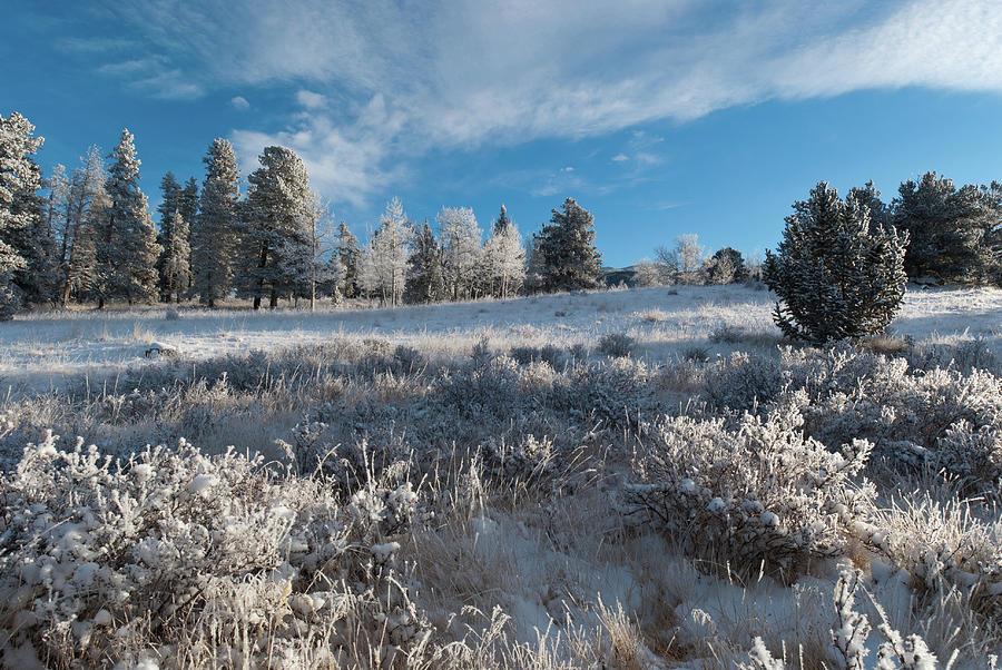 Kenosha Pass Photograph - Winter Snow At Kenosha Pass by Cascade Colors