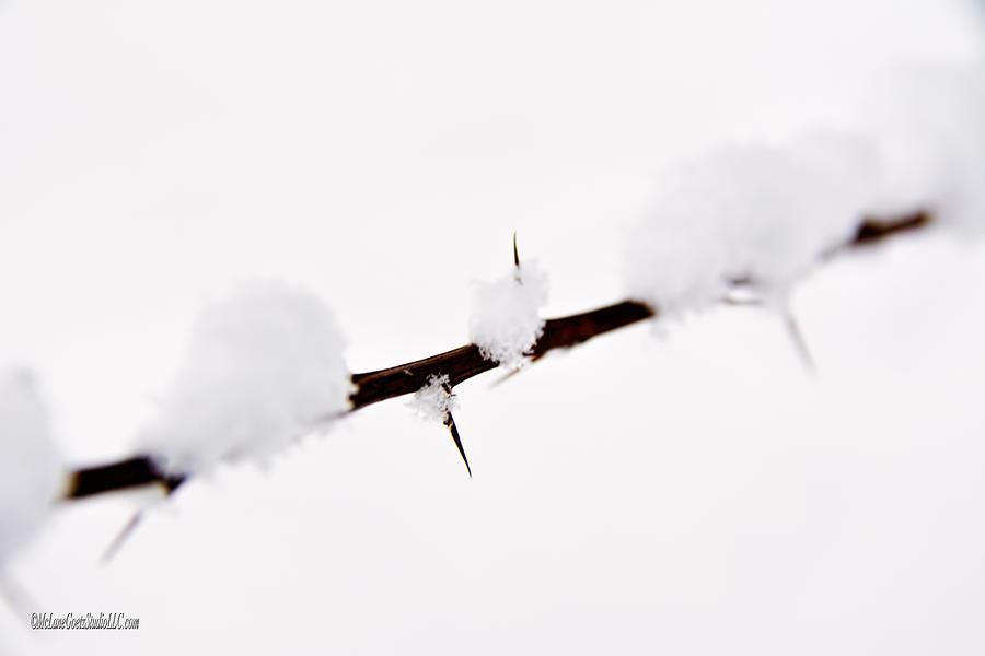 Usa Photograph - Winter Snow Covered Thorns by LeeAnn McLaneGoetz McLaneGoetzStudioLLCcom
