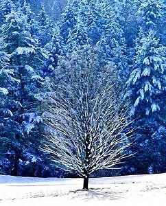Trees Photograph - Winter Solitude by Suerae Stein