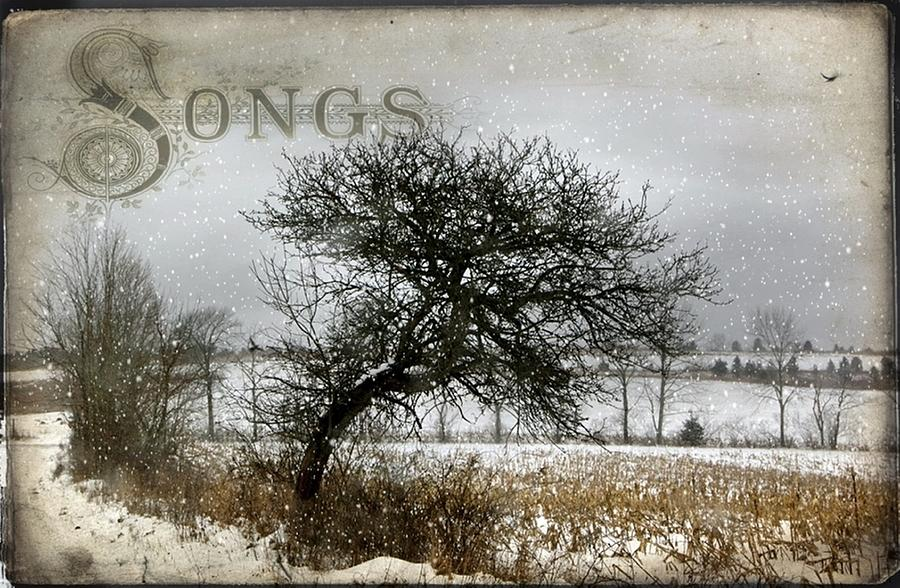 Winter Photograph - Winter Songs by Stephanie Calhoun