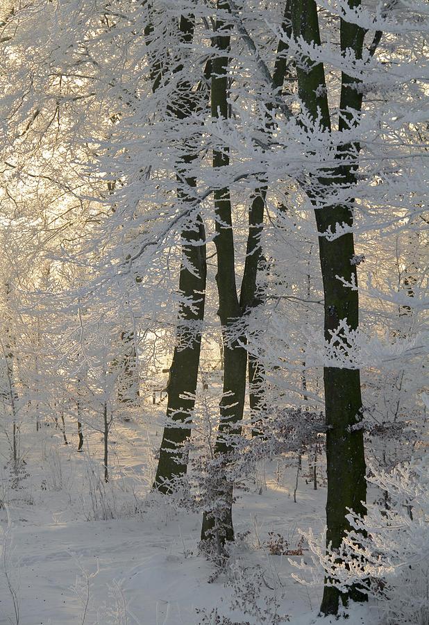 Forest Photograph - Winter Sun by Odd Jeppesen