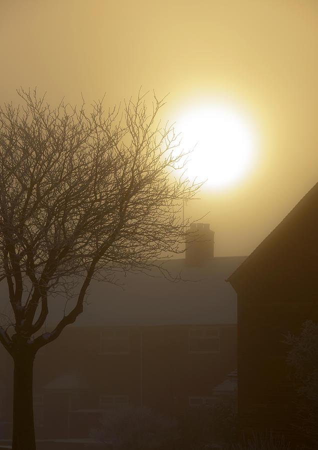 Art Photograph - Winter Sun by Svetlana Sewell