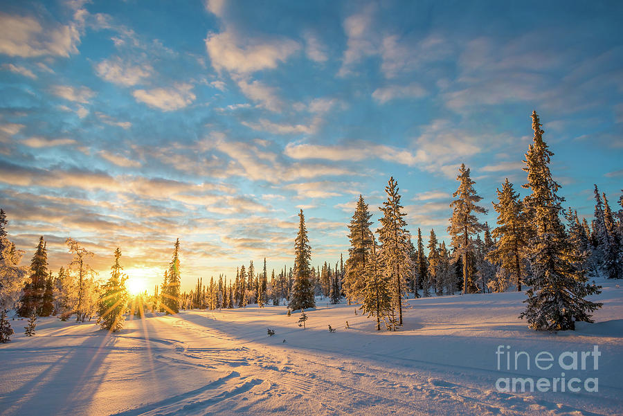 Winter Photograph - Winter Sunset by Delphimages Photo Creations