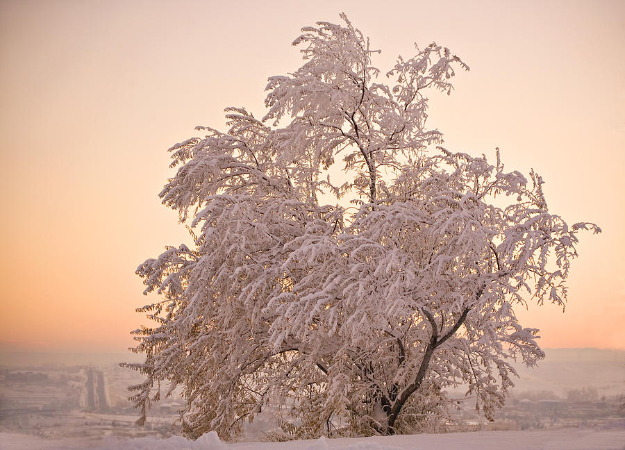 Winter Photograph - Winter Sunset by Marilyn Hunt