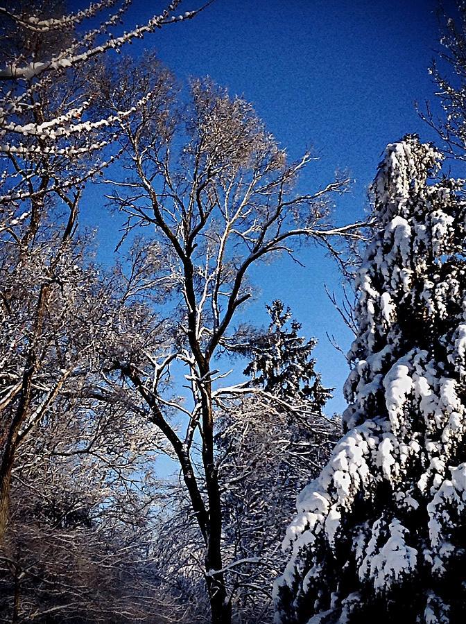 Winter Photograph - Winter Sunshine by Frank J Casella
