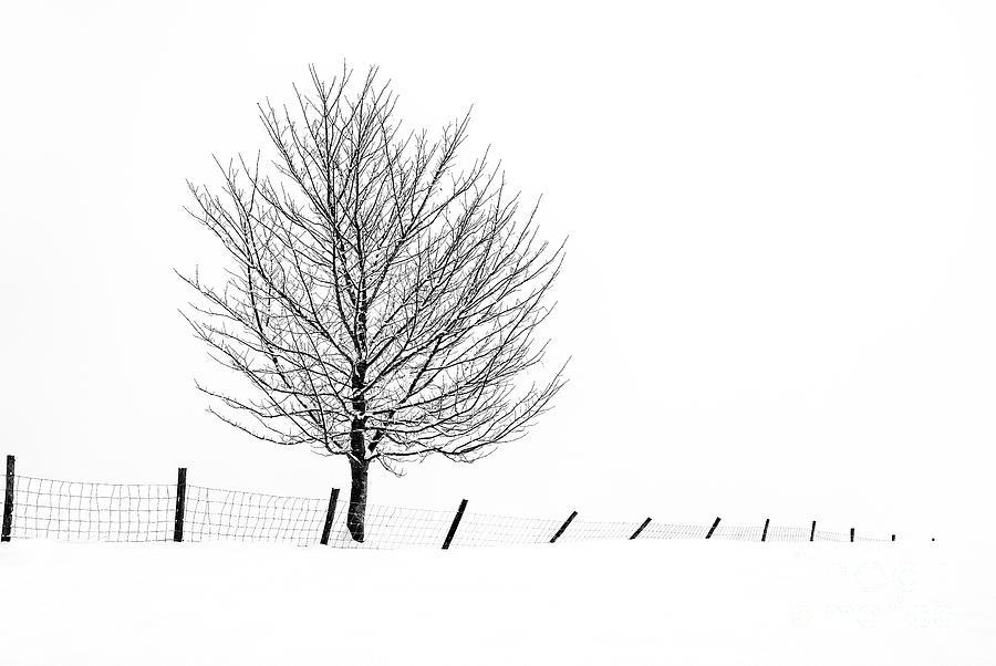Winter Tracery 2 by Janet Burdon