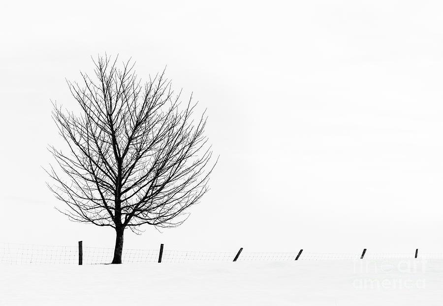 Winter Tracery by Janet Burdon