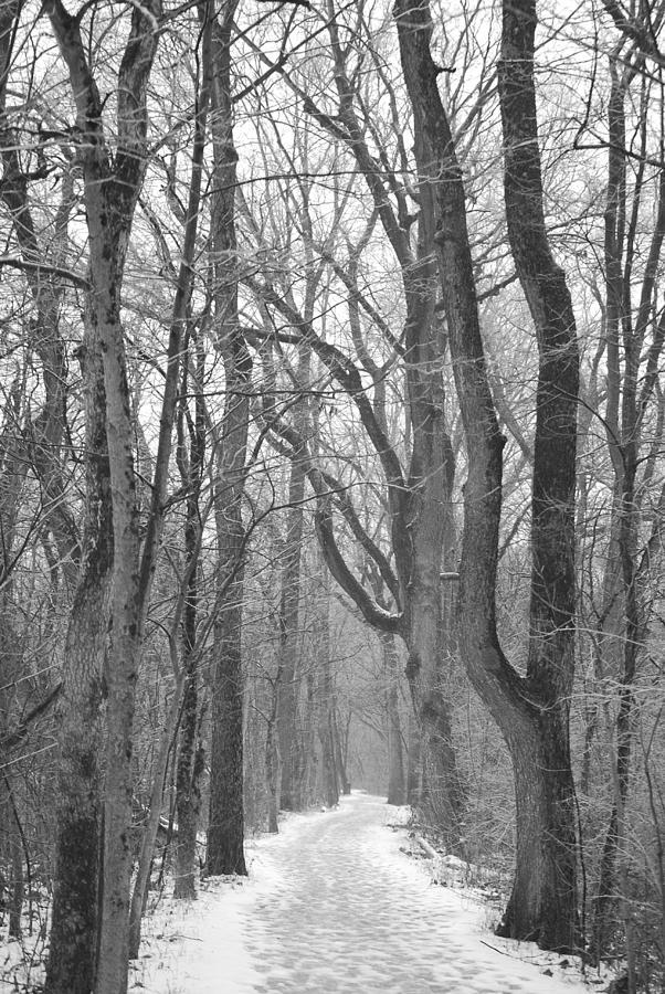 Nature Photograph - Winter Trail by Peter  McIntosh