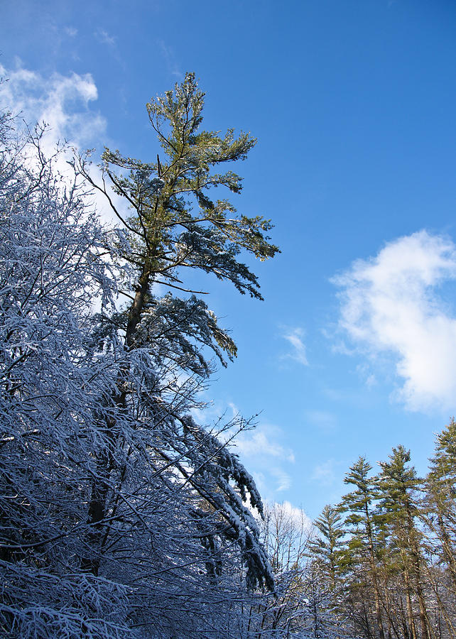 Winter Photograph - Winter Tree And Sky by Edward Myers
