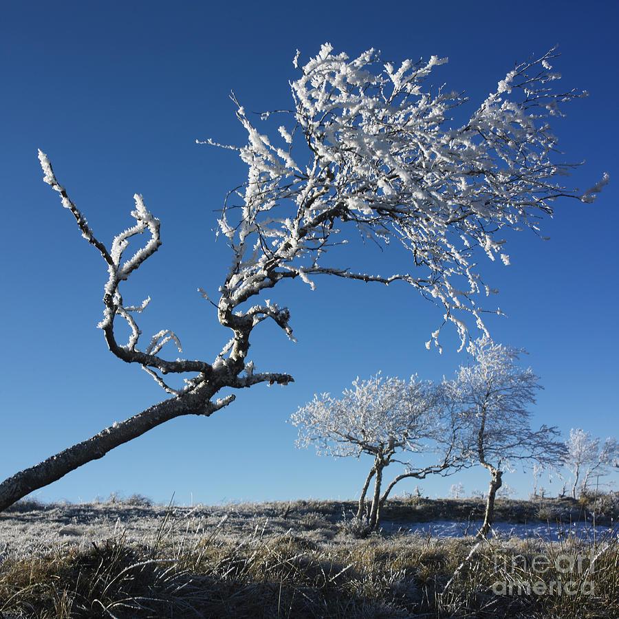 Bare Tree Photograph - Winter Tree. by Bernard Jaubert