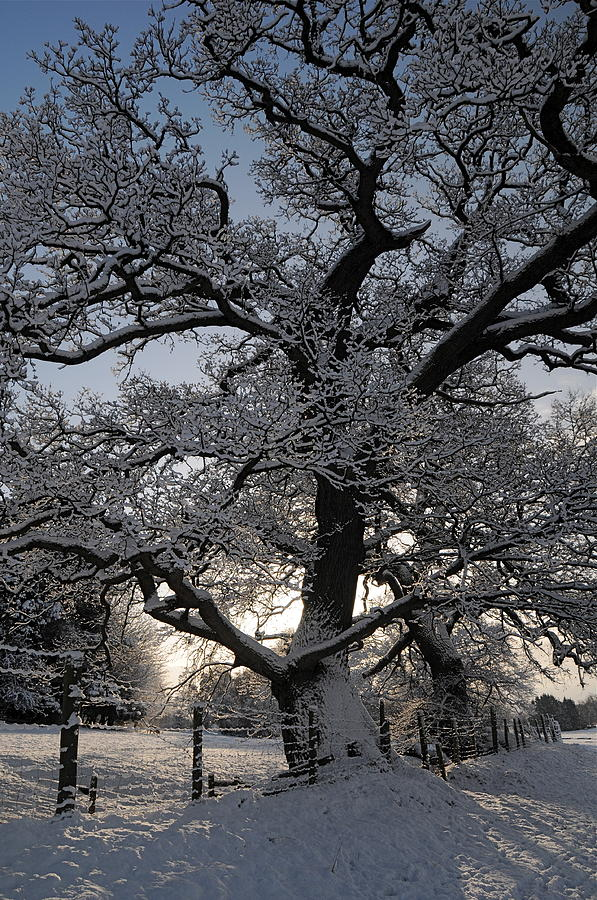 Winter Tree in North Wales by Harry Robertson