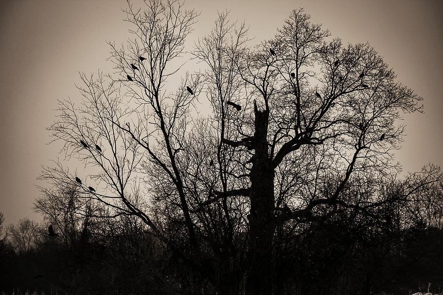 Winter Tree Silhouette Photograph