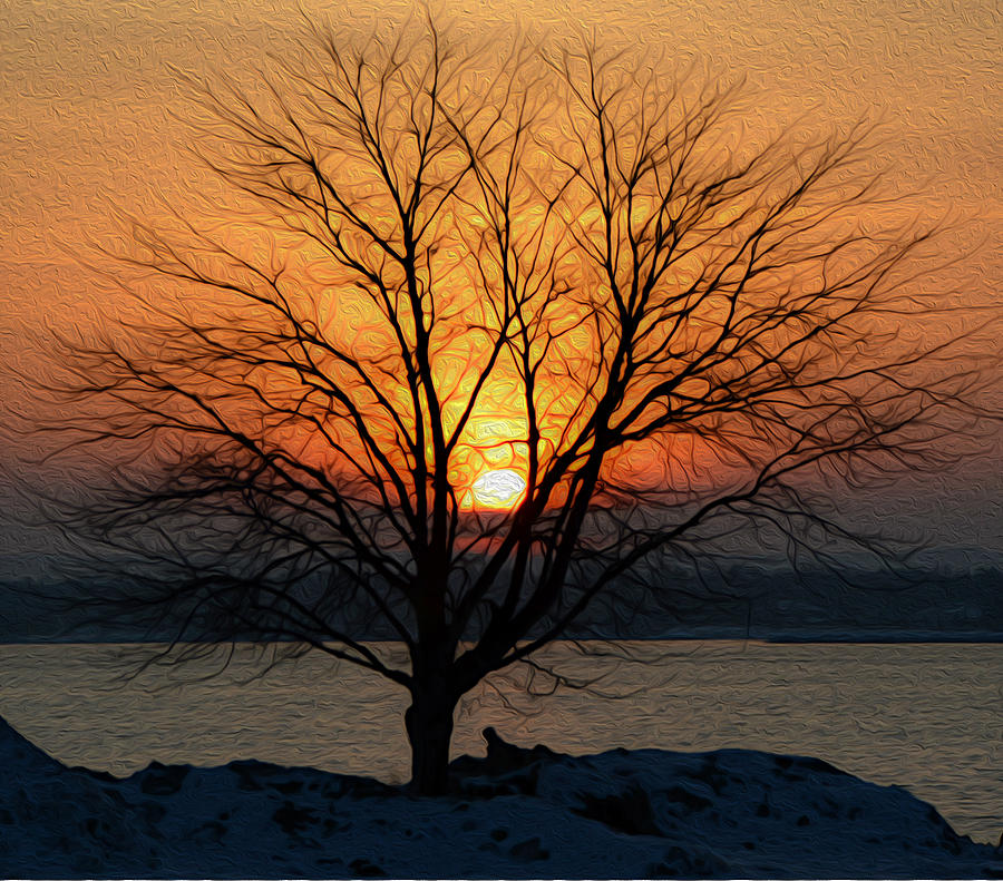 Winter Tree Sunrise by SimplyCMB