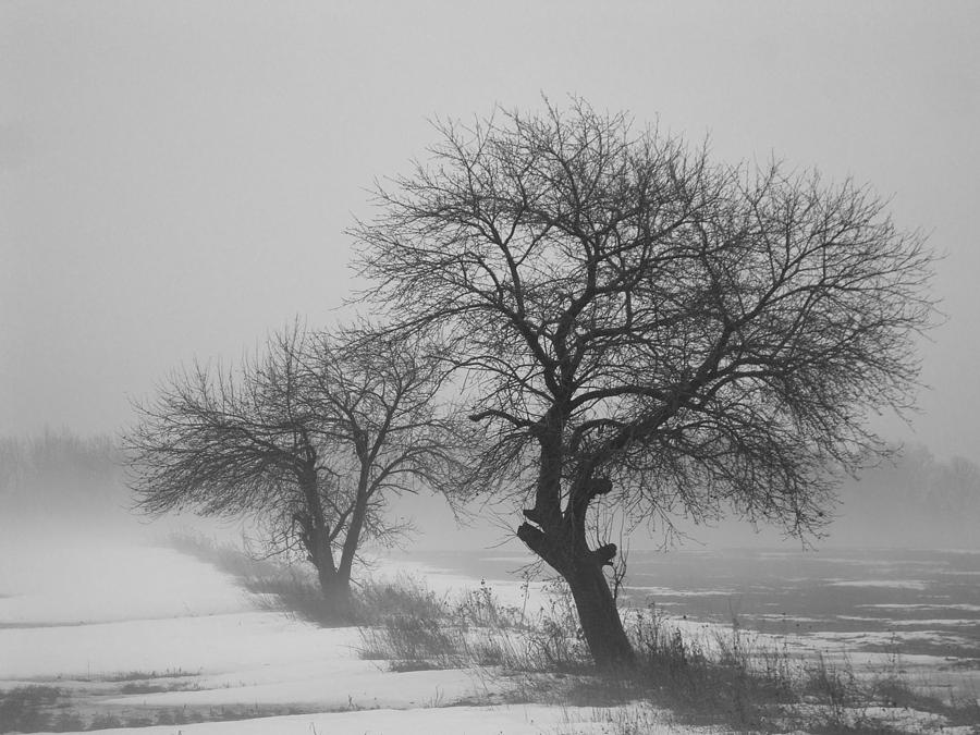Winter Photograph - Winter Trees by Chesley House